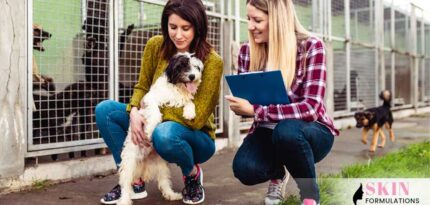 choose the right pet for your lifestyle
